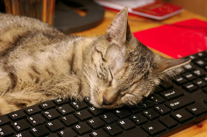 Katt och tangentbord arkivbild