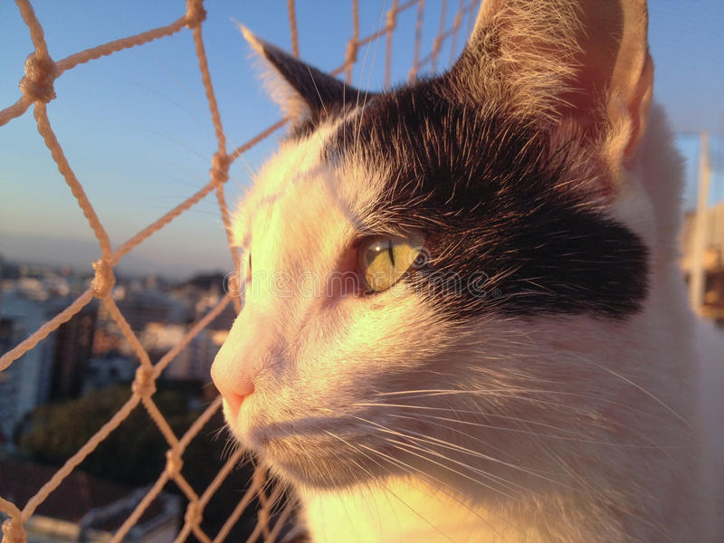 Katt på balkongen på solnedgången royaltyfria bilder