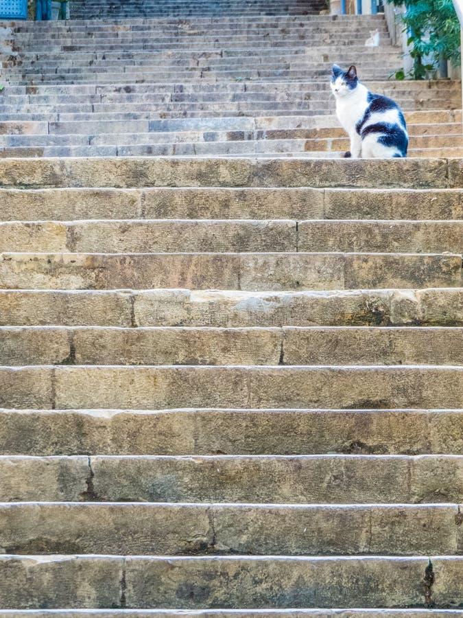 Katt på den berömda Sten Nicholas Stairs, Gemmayzeh, Beirut, Libanon royaltyfria bilder