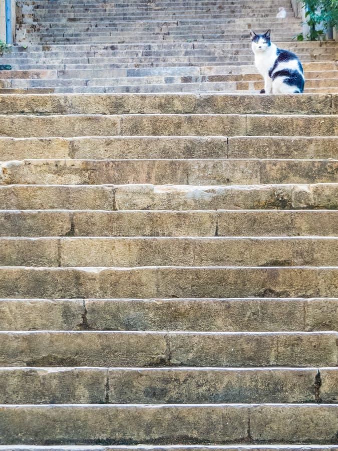 Katt på den berömda Sten Nicholas Stairs, Gemmayzeh, Beirut, Libanon arkivfoton