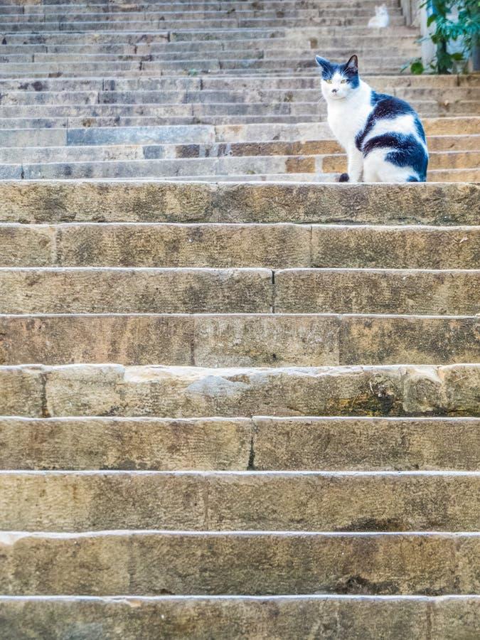 Katt på den berömda Sten Nicholas Stairs, Gemmayzeh, Beirut, Libanon arkivbild