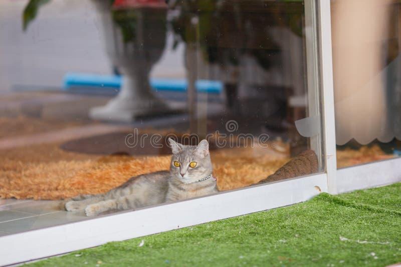 Katt på det klara glass fönstret arkivbilder