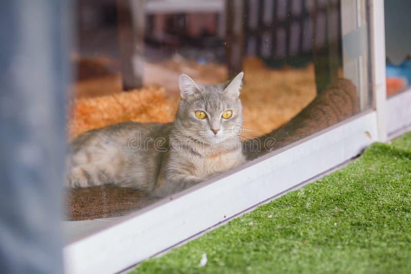 Katt på det klara glass fönstret royaltyfri bild