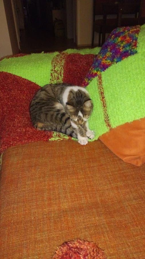 Katt på en filt royaltyfri fotografi