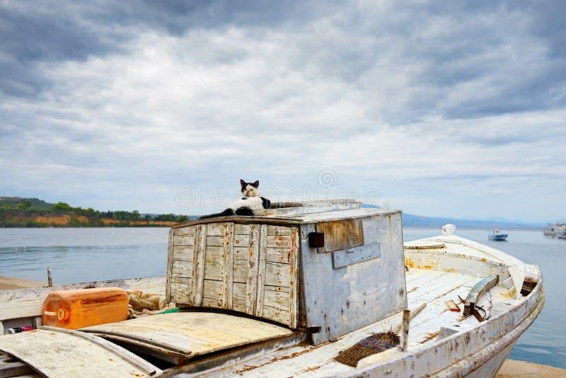 Katt på en gammal barkass arkivfoton