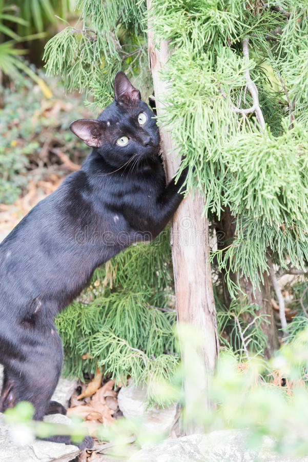 Katt på en pol royaltyfri fotografi