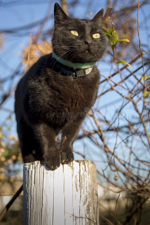 Katt på en pol arkivfoto