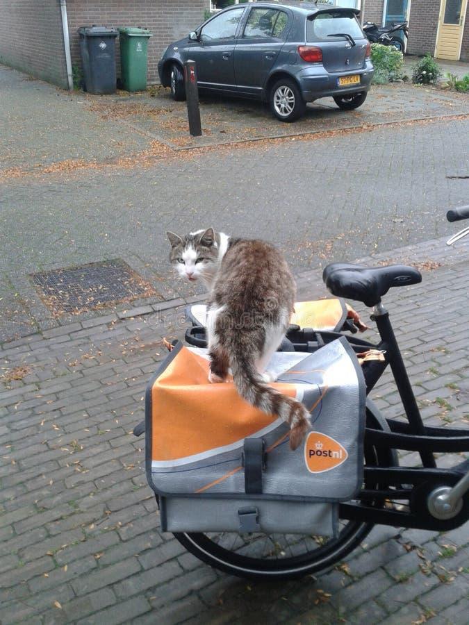 Katt på en postpåse royaltyfri fotografi