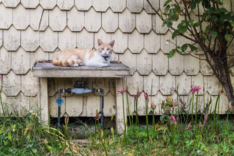 Katt på en tabell i Puerto Varas, Chi royaltyfria foton