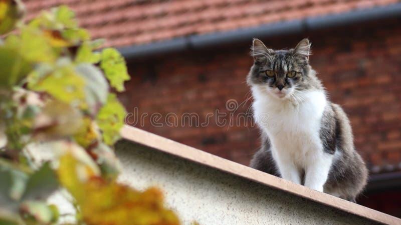 Download Katt på en vägg fotografering för bildbyråer. Bild av stirrande - 78732397