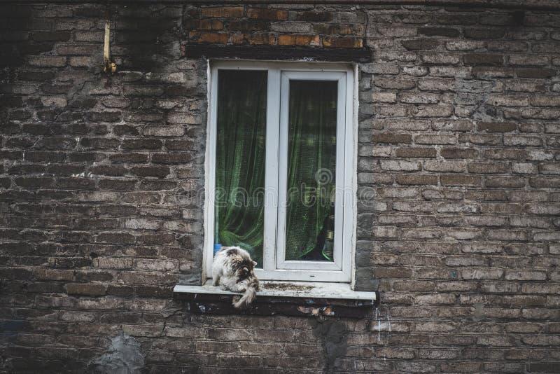 Katt på fönster royaltyfri bild