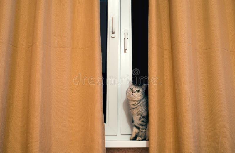 Katt på fönster royaltyfria foton
