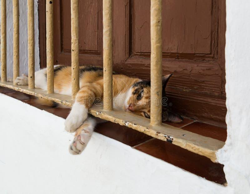 Katt på fönsteravsatsen royaltyfri foto