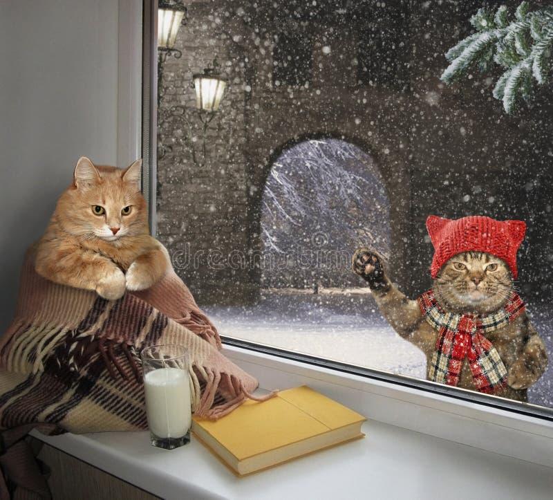 Katt på fönsterbrädan och dess vän fotografering för bildbyråer