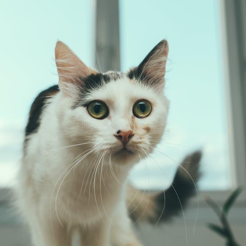 Katt på fönstret arkivfoton