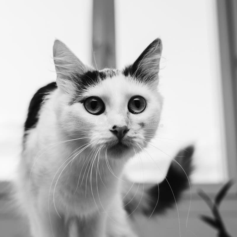 Katt på fönstret royaltyfria foton