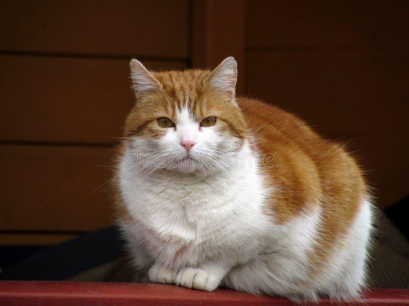Katt på farstubron royaltyfria bilder
