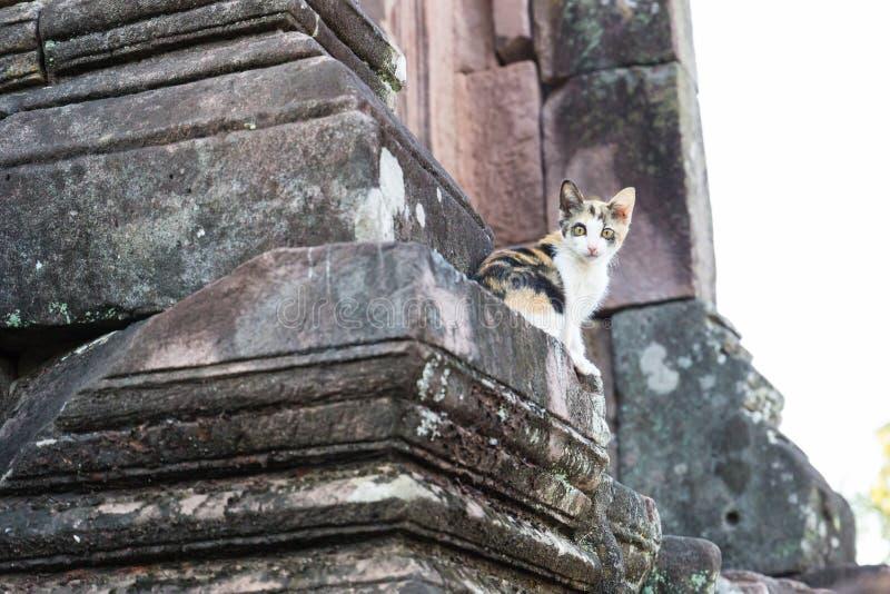 Katt på forntida stenbuddistpagod arkivfoton