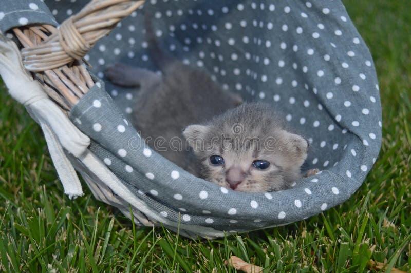 Katt på korg royaltyfri fotografi