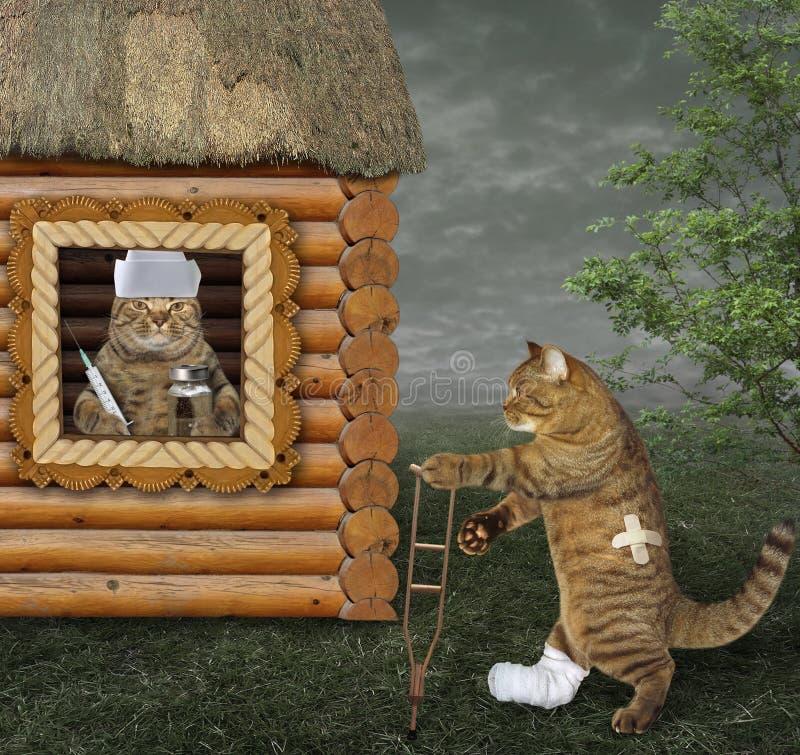 Katt på kryckan och hans veterinär royaltyfria bilder