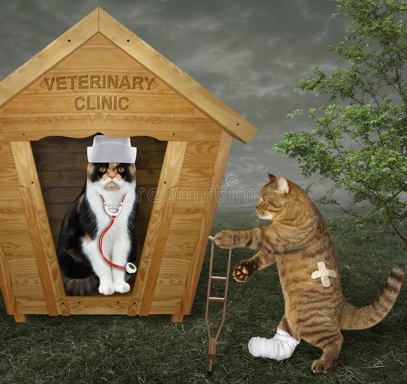 Katt på kryckan som går till veterinären royaltyfria bilder