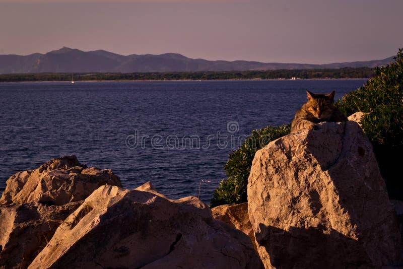 Katt på rocksna royaltyfria bilder
