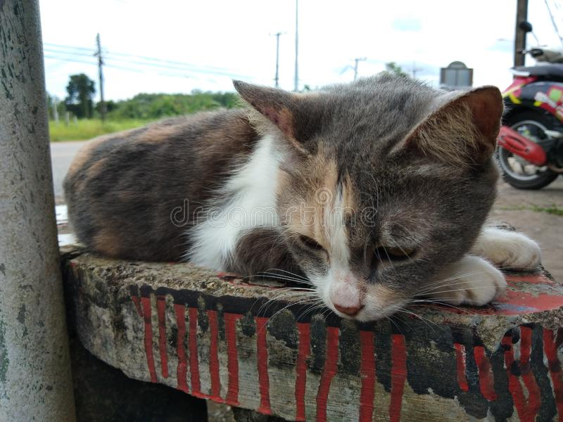 Katt på skrivbordet royaltyfri foto
