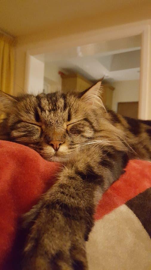 Katt på sofaen royaltyfri foto