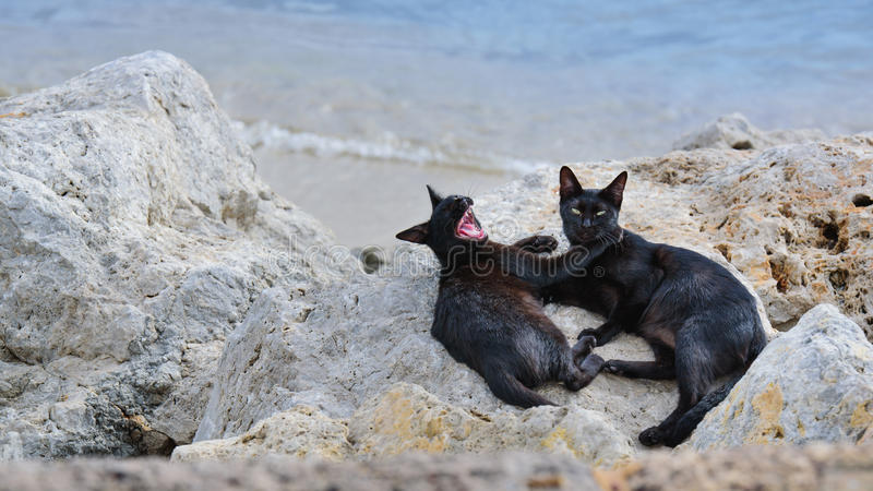 Katt på stranden arkivbild