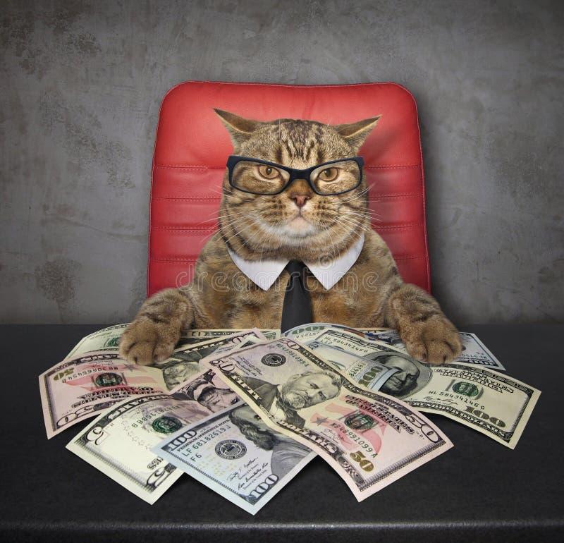 Katt på tabellen med dollar fotografering för bildbyråer