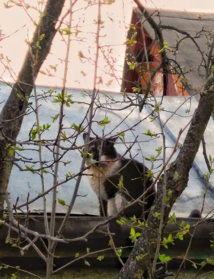 Katt på taket royaltyfri foto
