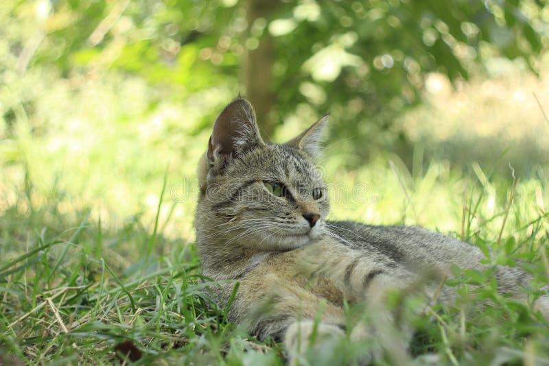 Katt på trädgård royaltyfria foton
