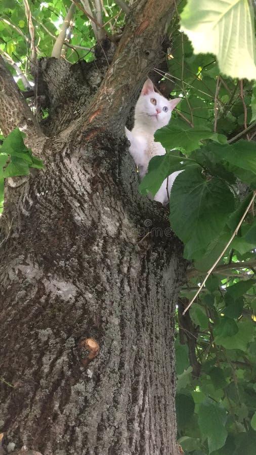 Katt på treen royaltyfri bild