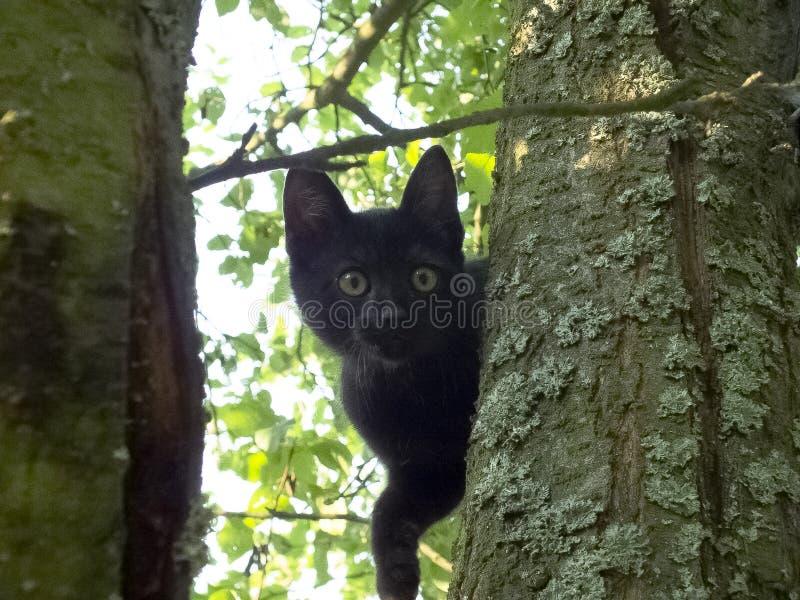 Katt på treen arkivbilder