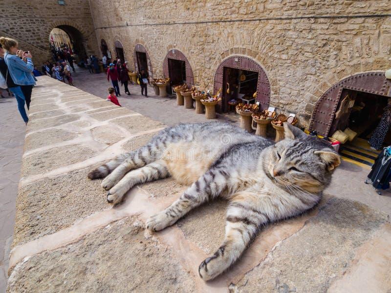 Katt på väggarna av fästningen i Essaouira royaltyfri bild