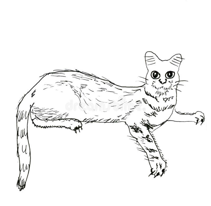 Katt på vit bakgrund, diagram, dragen hand arkivfoton