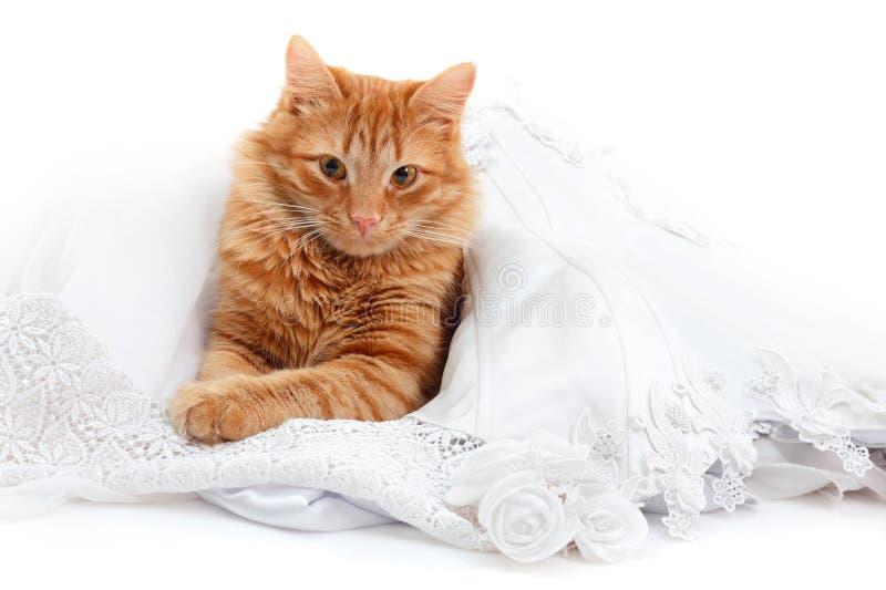Katt som är röd i den vita klänningen för brudförbindelse arkivfoto