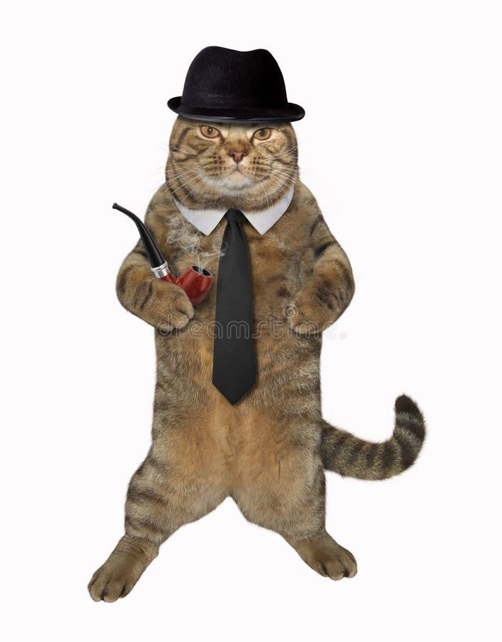 Katt som är snobbig med röret royaltyfria foton