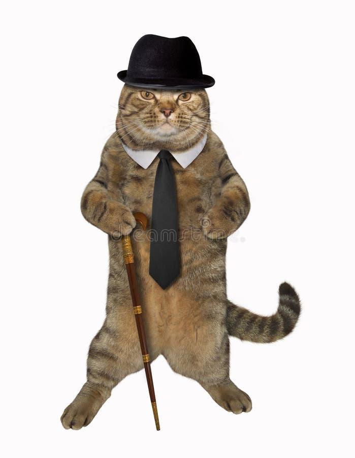 Katt som är snobbig med rottingen royaltyfria foton