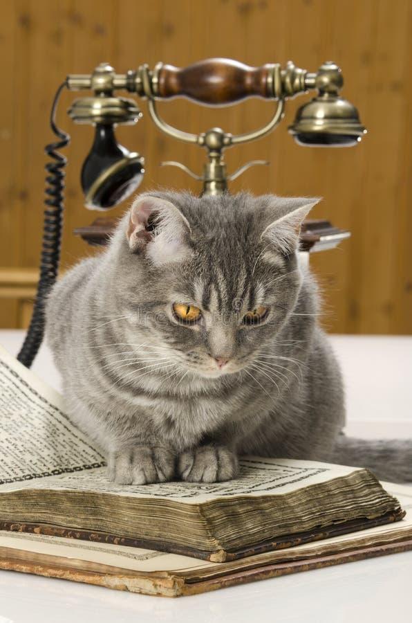 Katt som är vetenskaplig med böcker på tabellen royaltyfria foton
