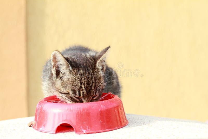 Katt som äter mat royaltyfria bilder