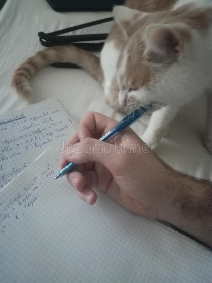 Katt som äter min penna arkivfoton