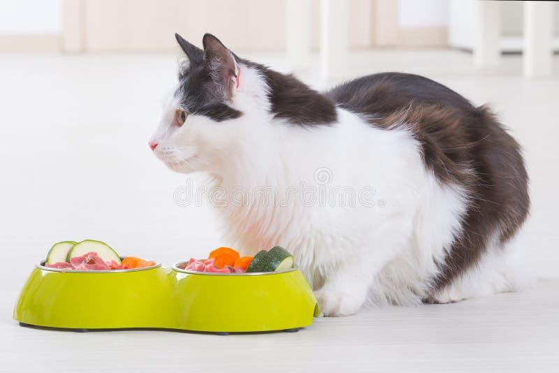 Katt som äter naturlig mat från en bunke royaltyfria bilder