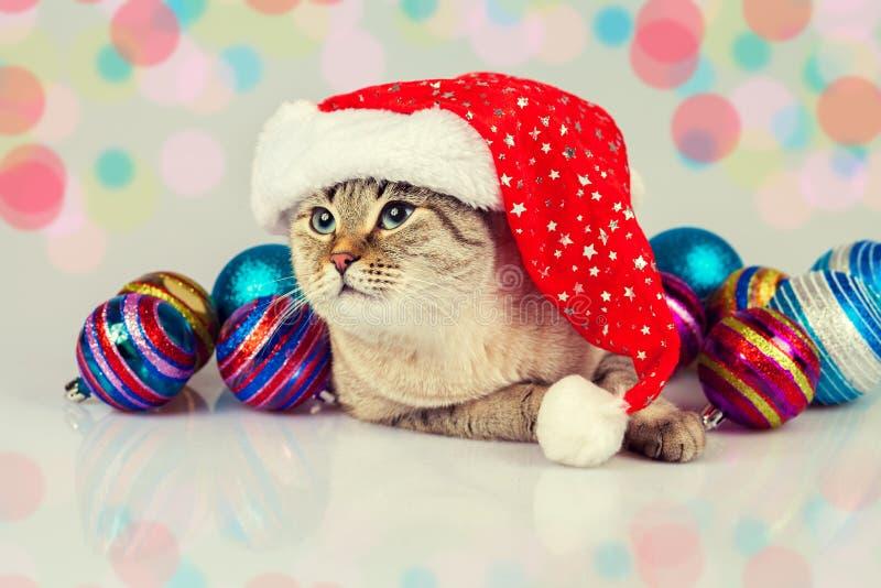 Katt som bär den Santas hatten fotografering för bildbyråer