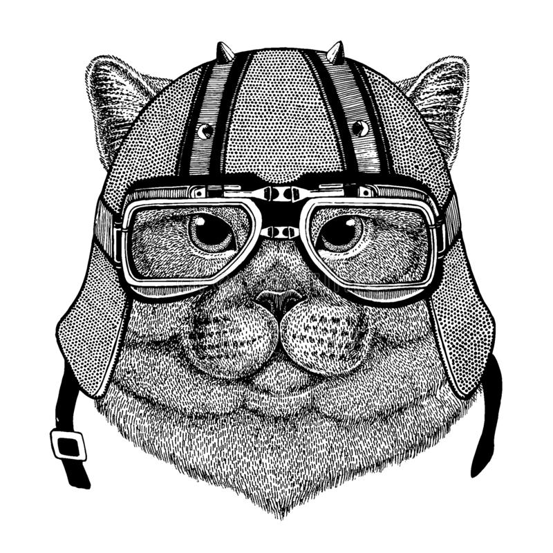 Katt som bär en motorcykel, aero hjälm Utdragen bild för hand för tatueringen, t-skjorta, emblem, emblem, logo, lapp vektor illustrationer