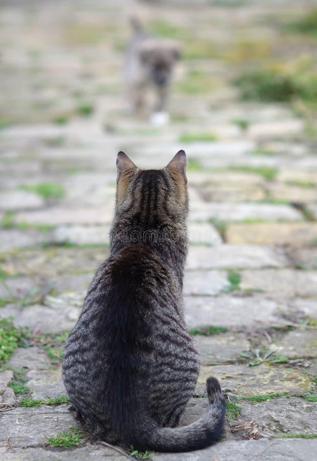 Katt som håller ögonen på litet att närma sig för valp royaltyfri foto
