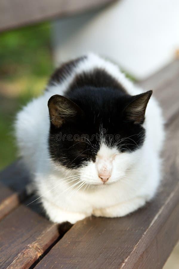 katt som har rest royaltyfria bilder