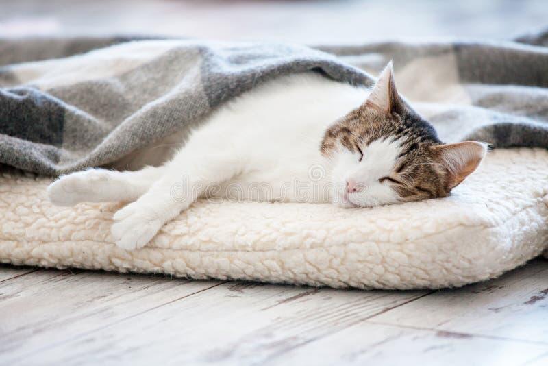Katt som hemma sover royaltyfri foto