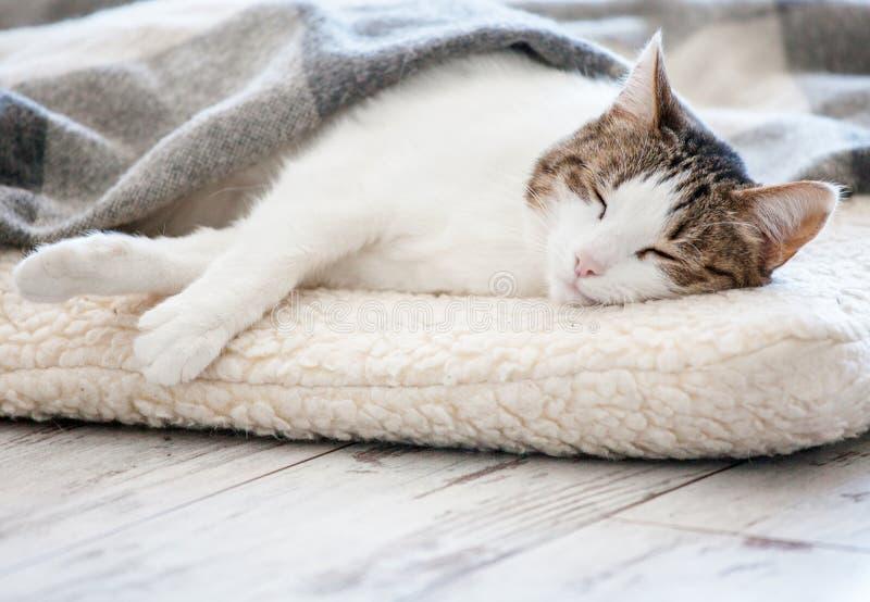 Katt som hemma sover royaltyfria foton