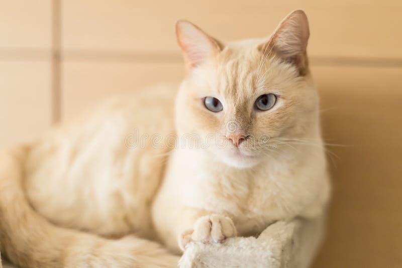 Katt som hemma vilar royaltyfria foton